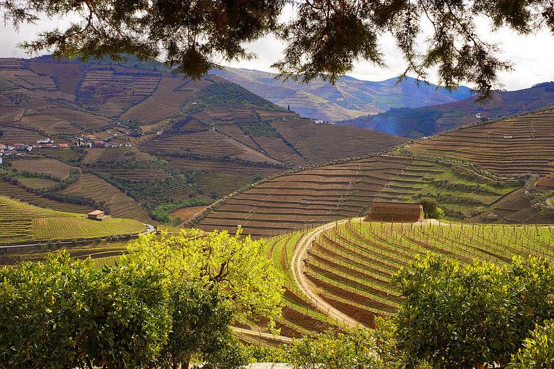 Rota dos Vinhos do Douro e Vinho do Porto