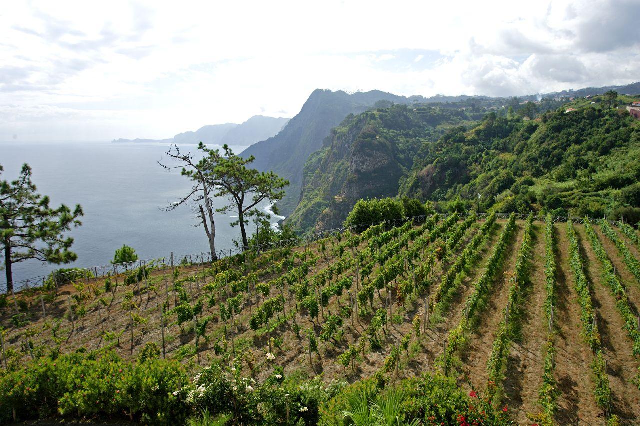Rota do vinho da Madeira