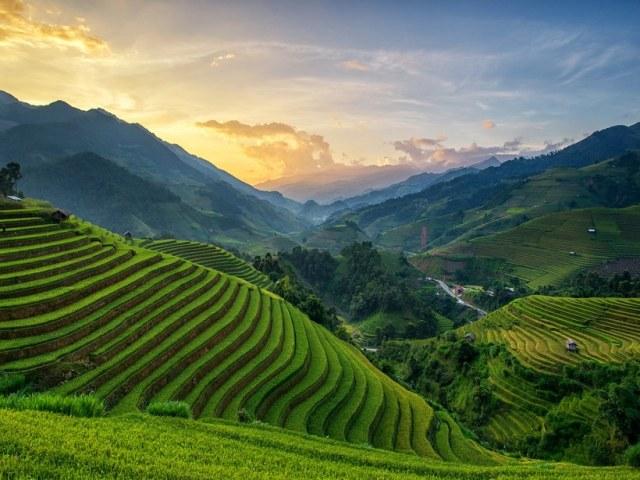 Mù Cang Chải: Vietname