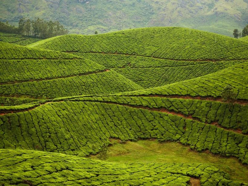 Propriedade do chá de Kolukkumalai: Munnar,Índia