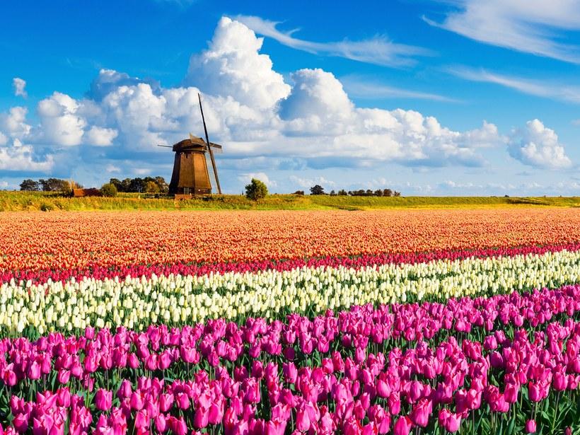 Parque Keukenhof, Holanda