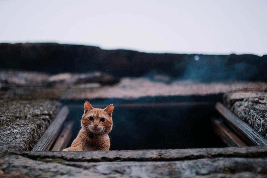 Queima do Gato