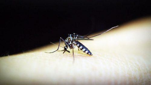 50 die in Yemen from mosquito-borne disease