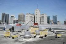 San Francisco - Bees Buzzing Rooftops 7