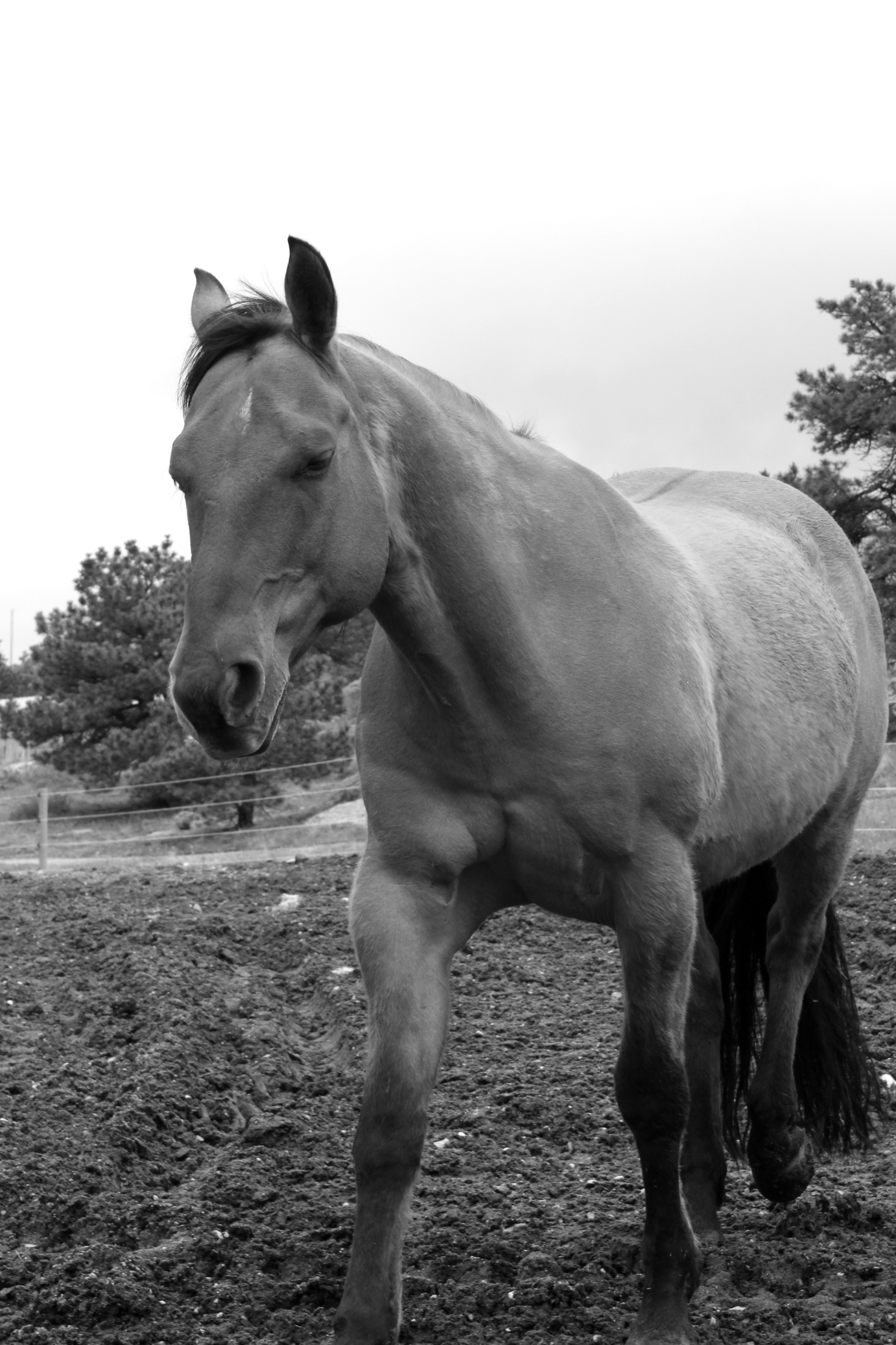 The horse Monty.
