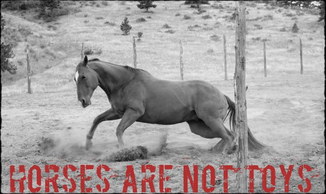 "Image of a horse galloping with text ""Horses are not toys"""