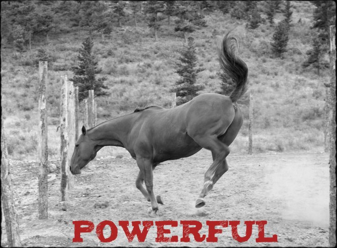 "Image of a horse bucking with text ""Powerful""."