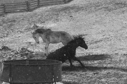 Old Black and White Horses