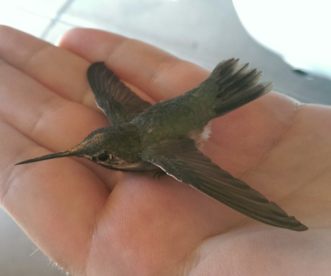 Image of a hummingbird in a persons hand