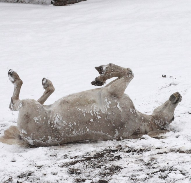 havin a good snow roll...