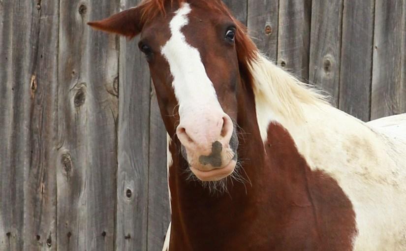 <em>goofball chocolate milk horse</em>