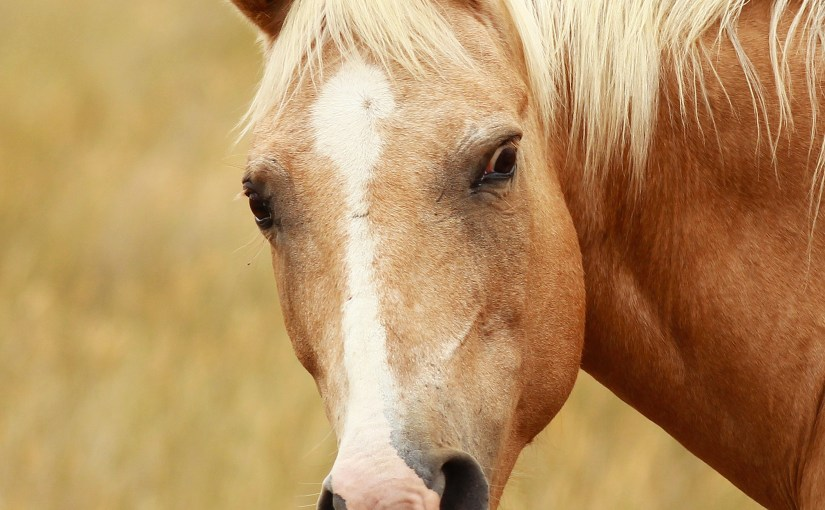 Another Very Photogenic Horse
