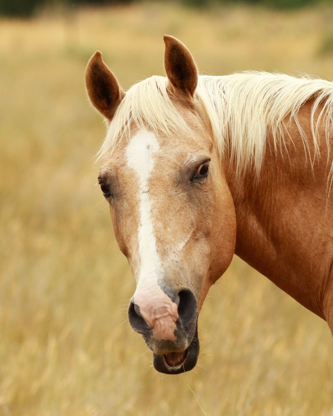 She's not exactly the most photogenic horse ever... (low resolution version)