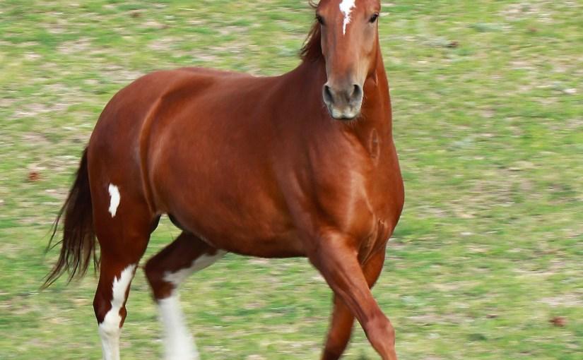 Prancy Baby Mustang