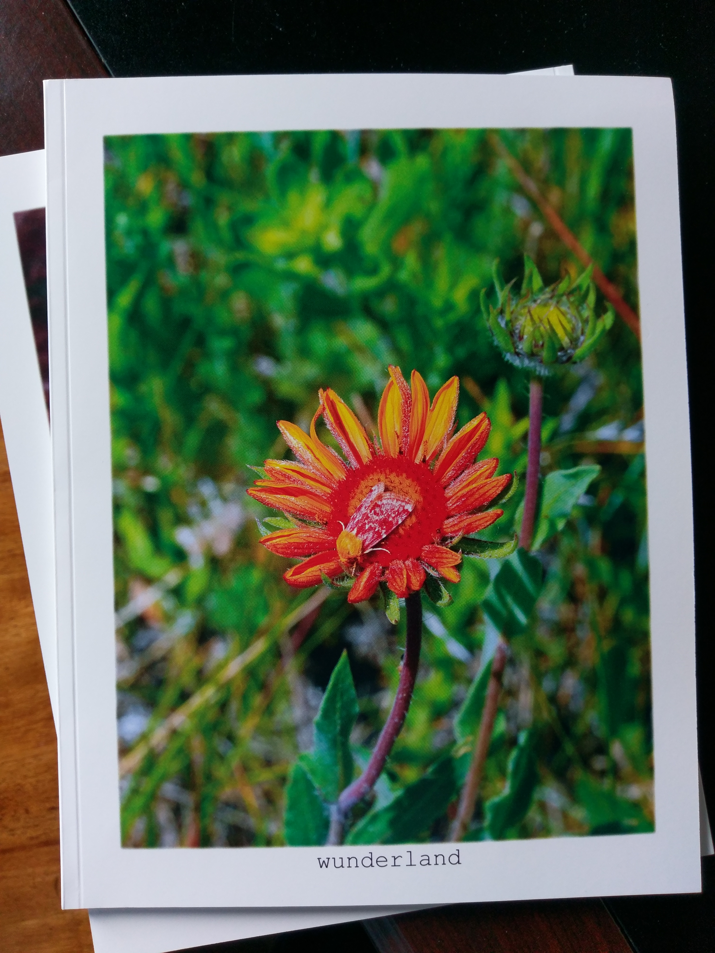 Firemoths: The Firemoths of the Colorado Rocky Mountains front cover...
