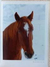 Horses in Snowland