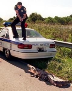 Redneck cop