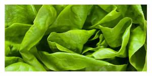 Des salade avec des pesticides interdits