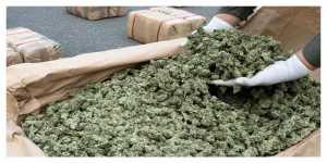500 kg de cannabis saisie dans un camion à Narbonnes