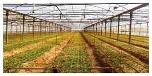 Pesticides : les produits à base de métam-sodium seront interdits en France, annonce l'Anses