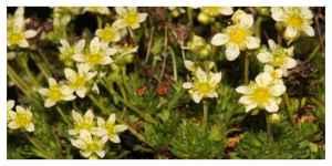 15 % des espèces de flore sauvage métropolitaine sont menacées de disparition