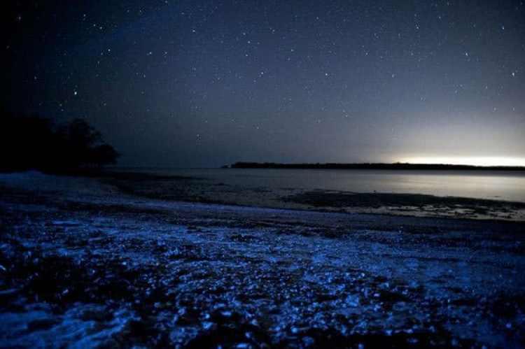 vadho-island-sea-star01
