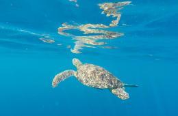 snorkelling-em-gili-islands
