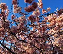 Primavera-na-Alemanha (1)