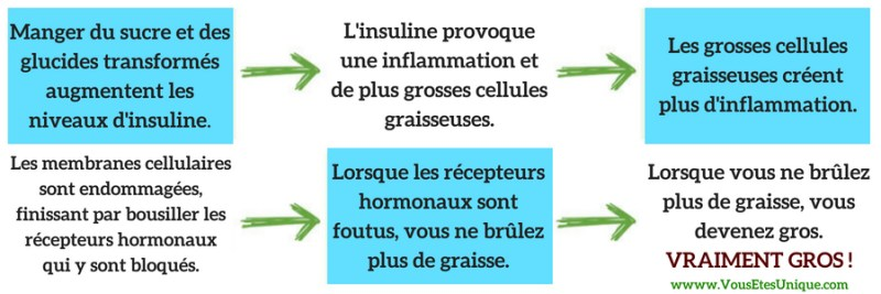 CYCLE-D-INFLAMMATION DE-L-OBESITE-Jean-Marc-Fraiche-HB-Naturals