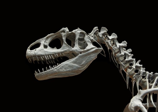 la-sante-osseuse-Complexe-Exclusif-D3-Plus-Jean-marc-fraiche-VousEtesUnique.com