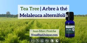 tea-tree-Melaleuca-alternifolia-Arbre-a-the-Huile-Essentielle-HB-Naturals-Jean-Marc-Fraiche-VousEtesUnique