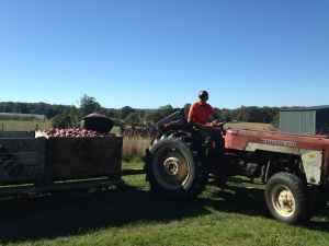 Fruit Picking _Wayne - Australie