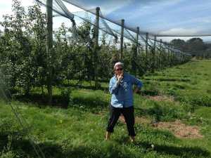 Fruit Picking _Mumu - Australie