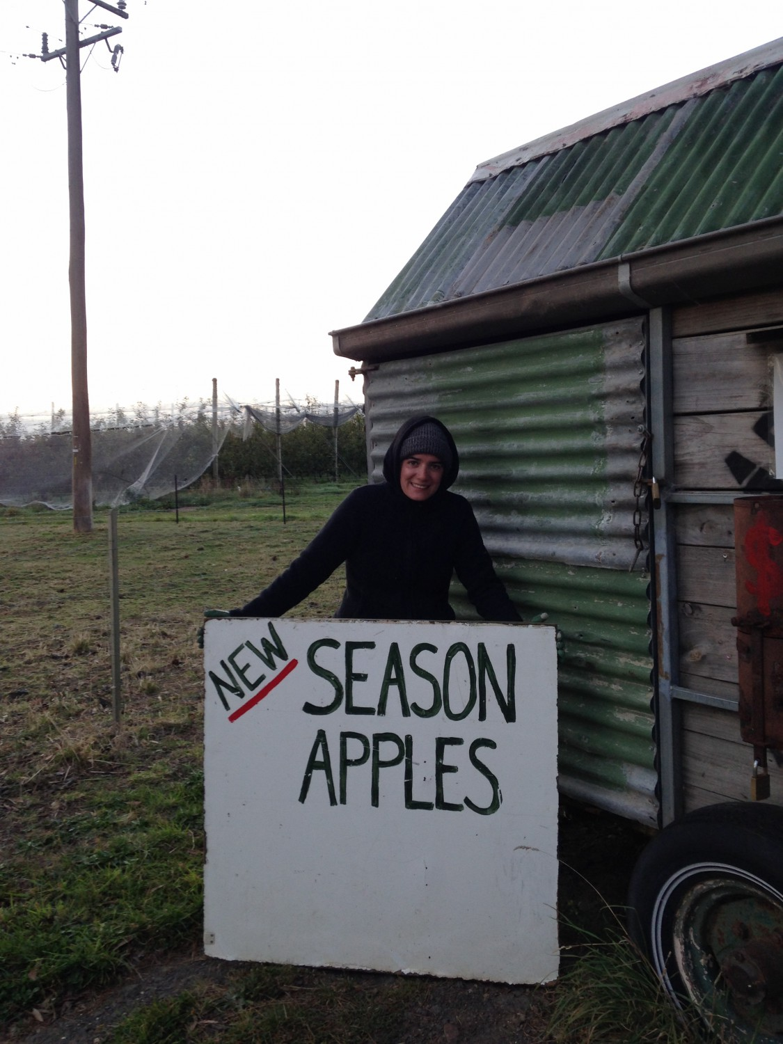 Apple Picking australie