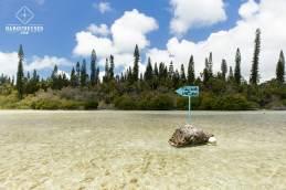 Randonnée vers la Piscine naturelle - Ile des Pins