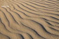 Earth Pattern - Sable - Northland