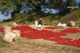 Piments qui sèchent - trek de Kalaw au Lac Inle