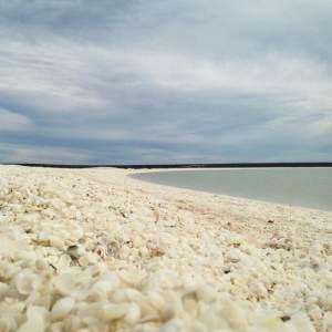 Shell Beach - François Peron National Park