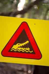 Roadsign Crocodiles - Cape Tribulation