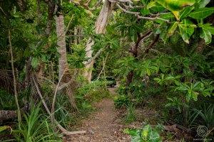El Cheapo, van Juicy - Daintree Rainforest