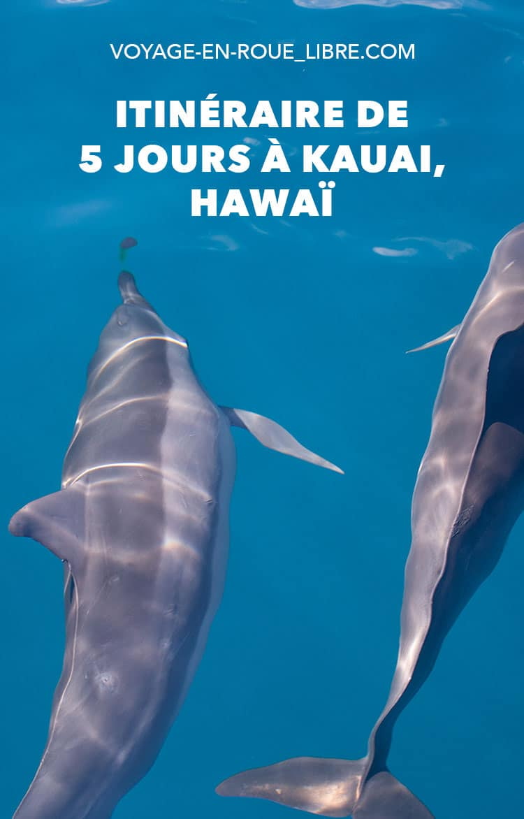 Découvrir l'île de Kauai à Hawaii en 5 jours. Partez à la découverte du grand canyon du Pacifique. Observez des baleines, dauphins et toute sa richesse marine !