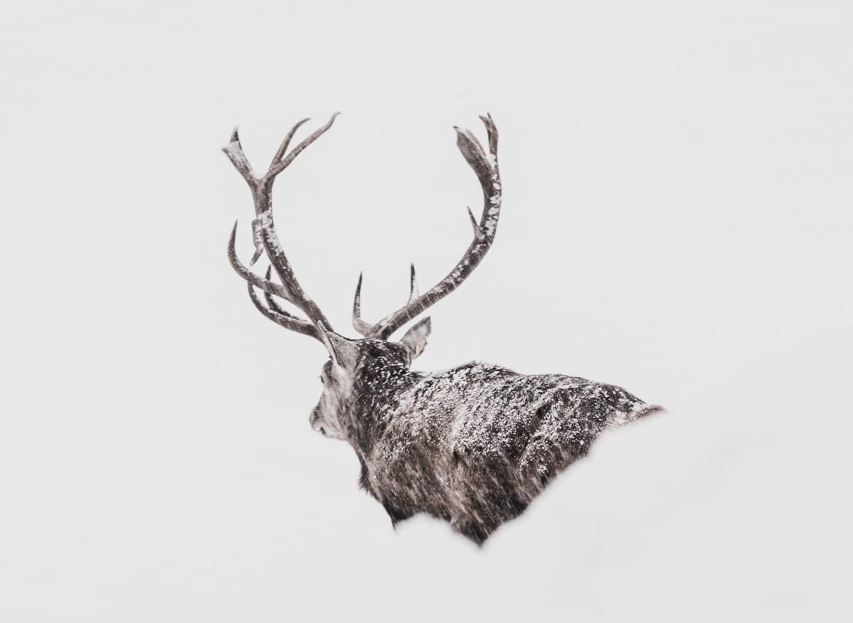Observer et capturer en image la faune sauvage quand on est vidéaste  en milieu isolé.