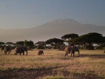 Parfaire un circuit au Kenya en privilégiant le sud