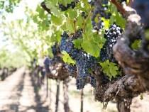 Les informations à savoir sur le tourisme viticole