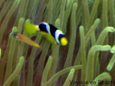 Nemo s'est perdu aux Maldives par voyage en beauté