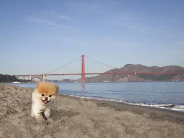 Boo le chien le plus mignon du monde à San Francisco par voyage en beauté
