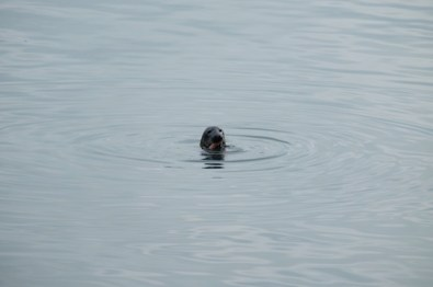 excursion-howth-irlande-port-blog-voyage-beaute-week-end-dublin-phoque-saumon