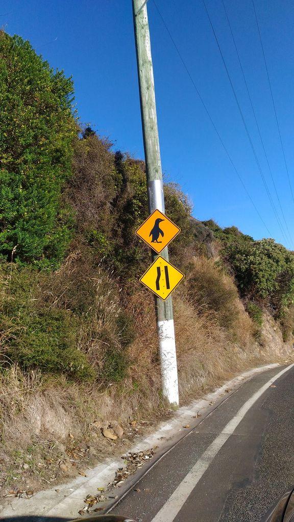 roadtrip-nouvelle-zelande-dunedin-otago-blog-voyage-19