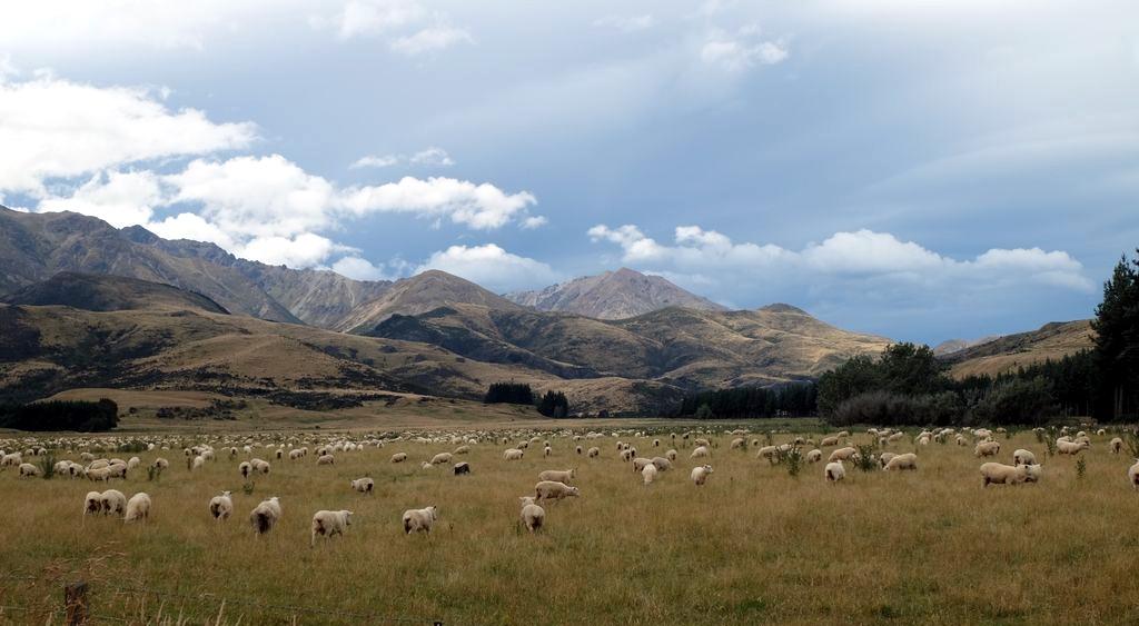 roadtrip-nouvelle-zelande-milford-sound-croisiere--blog-voyage-01