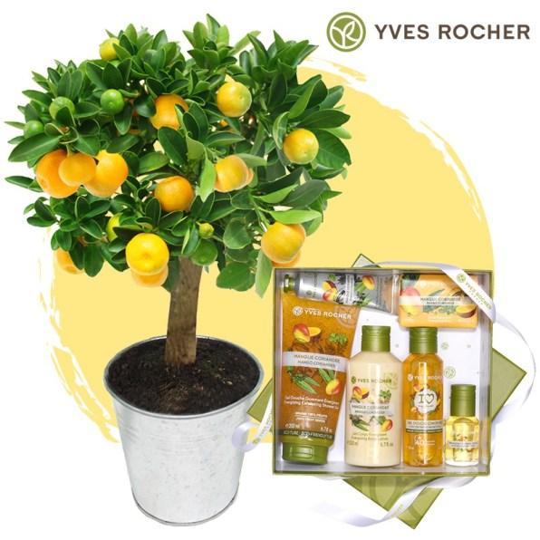 idee-cadeau-fete-des-meres-plantes-yves-rocher